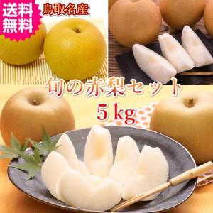 鳥取 甘い梨