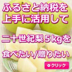 鳥取,二十世紀梨,5kg,ふるさと納税