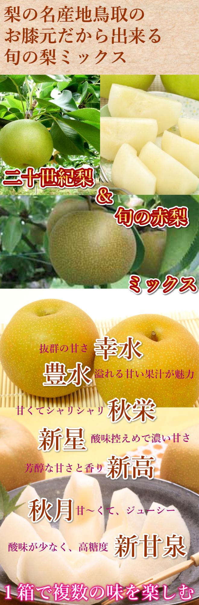 鳥取 二十世紀梨, 赤梨, 幸水梨,秋栄