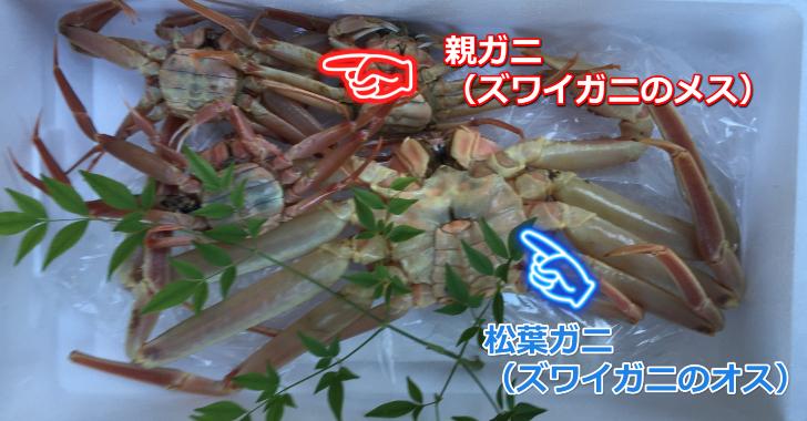 松葉ガニと親ガニ728X480