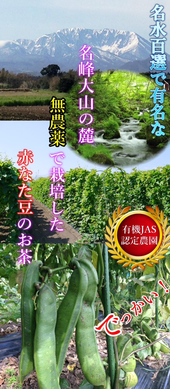 鳥取,大山,なたまめ茶,無農薬,JAS認定