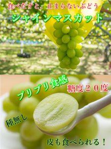 シャインマスカット,ぶどう,糖度20度,鳥取,北栄町,甘い,美味しい